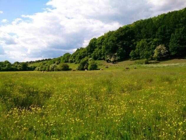 Bramdrup Skov