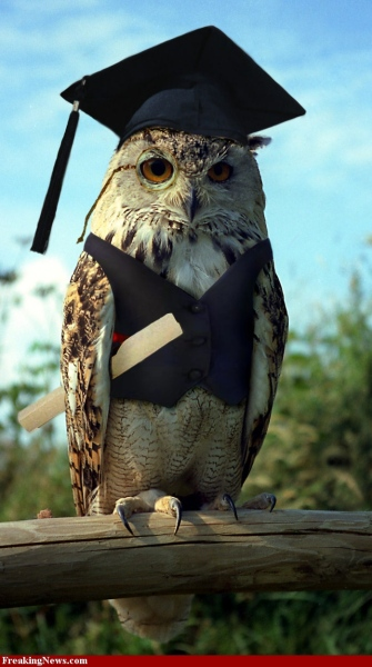 Wise-Owl-33640